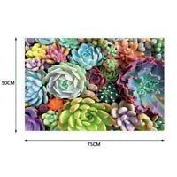 1000 Piece Succulent Spectrum Plants Puzzle Adult Children Puzzles Holiday L4D8