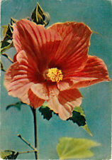 1960 RARE Soviet Russian postcard CHINESE RED ROSE paper thinner than usual