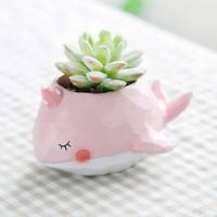 Pink Whale Flower Pot Animal Succulent Plant Pot Bonsai Cute Plant pot Kawaii
