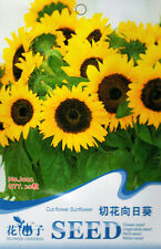 1 Pack 20 Cut-flower Sunflower Seed Helianthus Annuus Cut Flower Garden J002