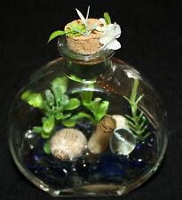 Handmade Decorative Glass Terrarium Bottle