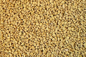 1 kg Bockshornklee Saat  Bockshornkleesamen feinste Qualität  GMO frei