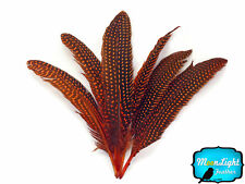 1/4 lb - ORANGE Polka Dot Guinea Fowl Wing quills Wholesale Feathers (bulk)