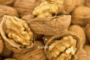 Whole Walnut in Shell, Premium Quality A!!