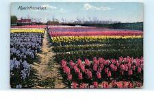 *Lisse Netherlands Holland Bulbs Flowers Field Farm Vintage Postcard C33