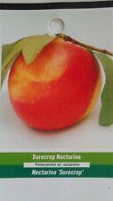 4'-5' Surecrop Nectarine Tree Live Healthy Fruit Trees Natural Plant Home Garden
