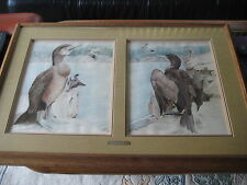 Original Watercolor Two Cormorants With Wooden Frame, Signed By Stell