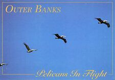 2 PC LOT-PELICANS IN FLIGHT-KAMI KAZI DIVE BOMBERS,OUTER BANKS,CAPE HATTERAS,NC