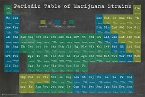 PERIODIC TABLE OF MARIJUANA STRAINS - WEED POSTER - 24x36 POT SMOKING 10885
