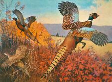 Pheasants 4 by Lynn Bogue hunt
