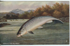 Fish Raphael Tuck & Sons Single Collectable Postcards