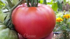 """10 graines de tomate ancieene """"646 Allemagne"""" délicieuse saveur sucrée m.bio"""