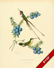 HUMMING BIRDS PERCHED ON BLUE BERRY PLANT PAINTING AVIAN ART REAL CANVAS PRINT