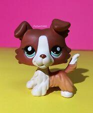 Littlest Pet Shop Collie Puppy Dog 1542 Brown & White Blue Eyes Rare  Lps Lot 1
