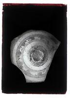 Foto Un Frammento di Un Vaso Antico Placca Da Lente N2 Negativo Ca 1920