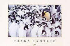 PENGUIN ART PRINT Huddle Frans Lanting