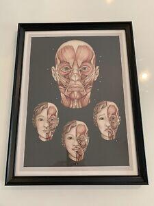 Large Framed Vintage Style Anatomy/Medical Illustration Print-Facial Expressions