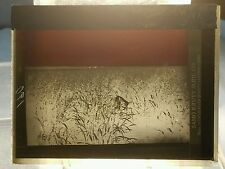 Vintage GLASS NEGATIVE SLIDE Picture of Farmer Standing In Corn Field