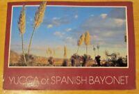 1 Arizona Postcard