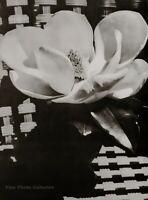 1926/75 Vintage MAN RAY Flower MAGNOLIA White Bloom Still Life Photo Art 12x16
