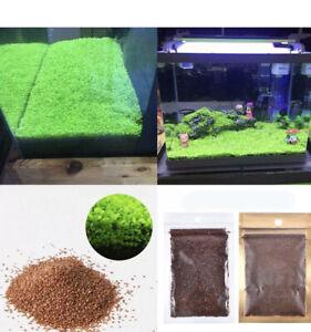 10g Aquarium Grass Plant Seeds Water Aquatic Fish Tank Small Plant Aus Stocks
