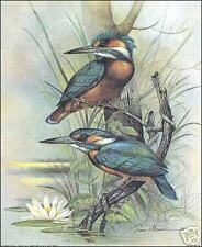 Kingfisher 8x10 Paper Tole 3D Decoupage Kit