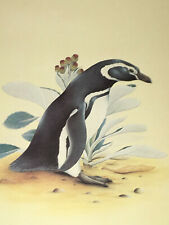Magellanic Peguin  Excellent Signed Limited Edition Color Print  Ian J. Strange