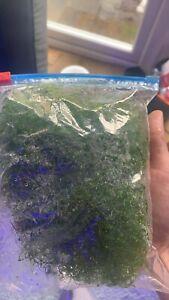cheato algae
