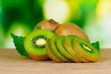 40 Kiwi Fruit Fresh Organic Seeds