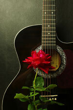 BEAUTIFUL GUITAR ROSE CANVAS PICTURE #13 STUNNING FLORAL HOME DECOR A1 CANVAS