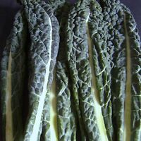 CAVOLO NERO (BORECOLE   KALE) - multiples of 10,000 seeds custom packed to order