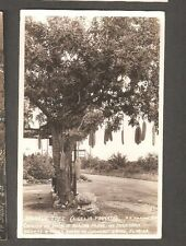 Vtg Postcard Sausage Tree Charlie Blacks Cocoanut Grove Fl Rppc Ingraham Highway