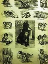 Dogs Mastiff Bull Beagle Hound Spaniel 1882 Art Matted