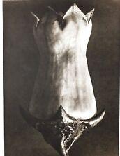 1942 FOTO ORIGINALE STAMPA ROTOCALCO PIASTRA 52. Karl Blossfeldt astratto botanico