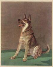 * German Shepherd - 1932 Vintage Dog Print - Diana Thorne