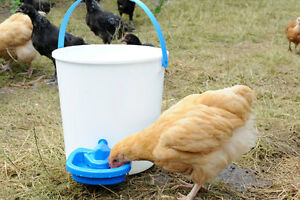 MAXI CUP AUTOMATIC POULTRY DRINKER