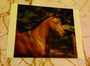Arabian Horse Postcard - Beautiful Bay At Liberty