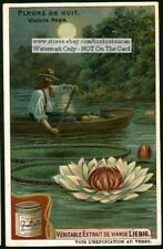 Blooming Great Water Lily of America NICE c1907 Trade Ad Card