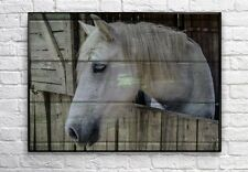 White Horse Print - Horse Art - Equestrian Art, Rustic Western Horse Decor