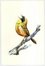 "Original Watercolor Painting 9 x 6"" Finch Bird #3 Not Aceo"