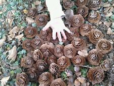 10 Super Cedar roses cedar rose pine cone Rustic Wedding Flowers Wooden Rose