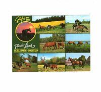 AK Ansichtskarte Pferde-Land Schleswig-Holstein