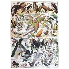 SCIENTIFIC BIRDS IDENTIFICATION OWL VULTURE TUCAN 30X40 CMS FINE ART PRINT ART P