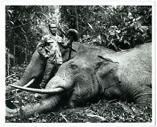 Photo le chasseur d'éléphant Vietnam Indochina 1950 elephant hunting trophy