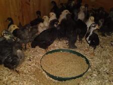 Exoticfarm Kükenkorn ohne Cocci. 6 kg Kükenstarter Hühnerfutter Kükenfutter