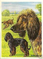 Rare 1952 Dog Art Print Austria Tobacco Company Bildwerk Card Afghan Hound Tazi