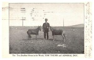 1907 Smallest Horses In The World Tom Thumb & Dot Freak Sideshow Postcard B64