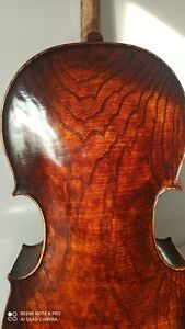 Meister Cello 4/4 Korpus 74,3cm