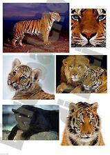 6 ADESIVI AUTO MOTO TUNING TIGRI TIGER TIGRE PANTERA NERA STICKERS LEONE LIONS