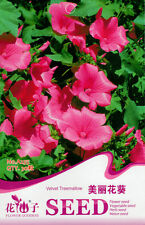 1 Pack 30 Beautiful Pink Sunflower Seed Lavatera Arborea Garden Flowers A255